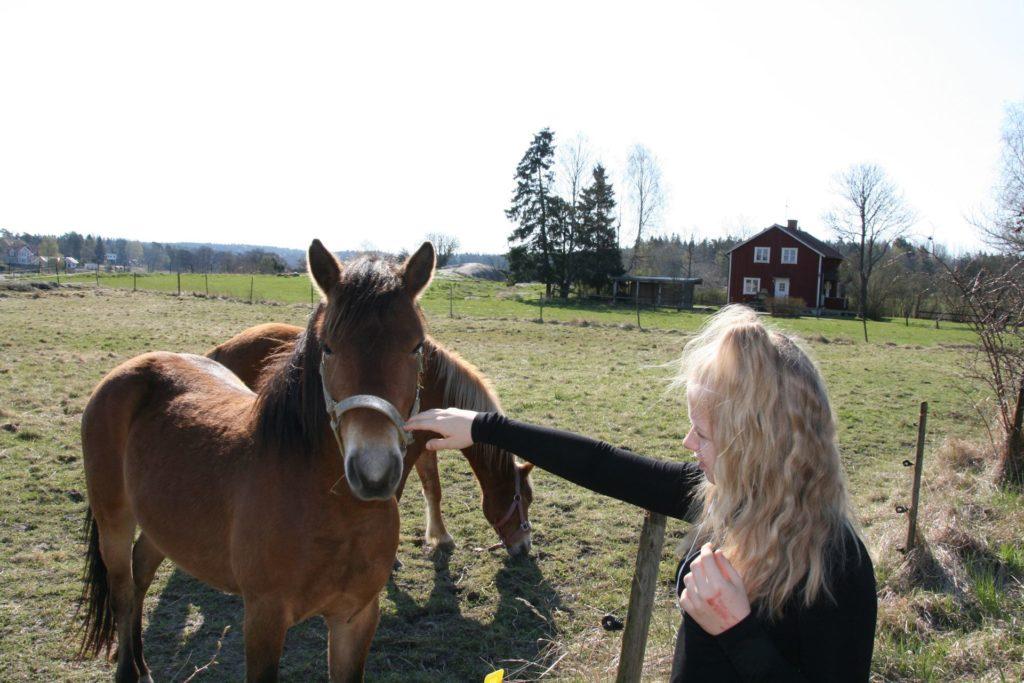 I sommar blir det djurkollo på Uddby gård. Här kollar Vera in de nya gotlandsrussen.